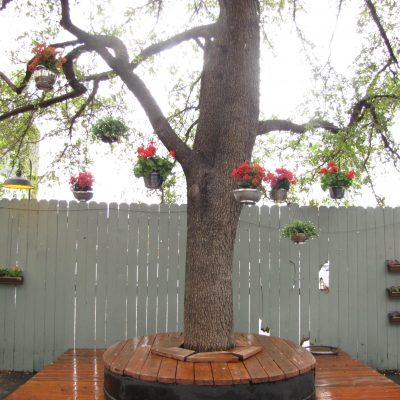 Courtyard remodel 14 - Tree Bench