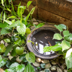 Mosquito Control - YardDoc - Austin, TX - What Attracts Mosquitoes - Stagnant Water in Flower Pot