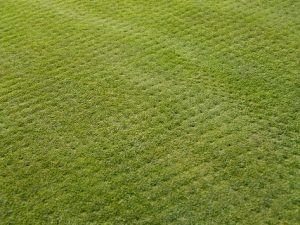 Lawn Aeration - Spanish, TX Landscaping Services - Spanish Oaks Lawn Care - YardDoc