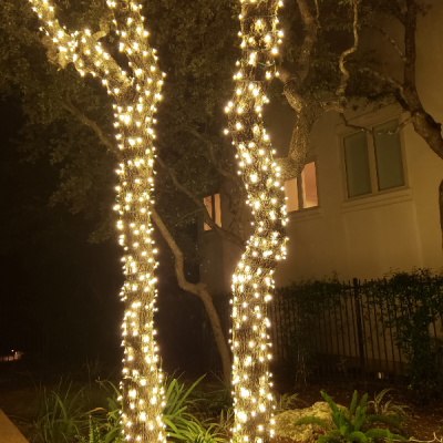 Holiday Lighting on Trees - Austin, TX