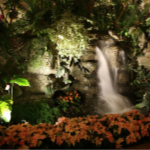 Landscape Lighting - YardDoc - Georgetown, TX - Waterfall and garden with landscape lights at night