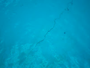 Pool Inspection - Crack in Bottom of In Ground Pool - Yard Doc - Austin, TX
