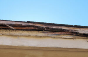 Termite Damage to Roof - Austin TX - YardDoc Termite Treatment Cropped